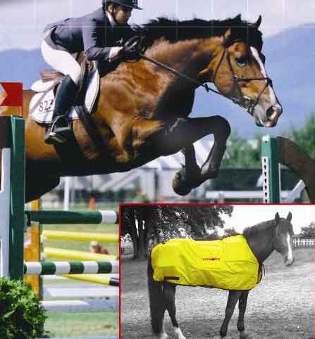 Equine infrared therapy blankets and infrared systems